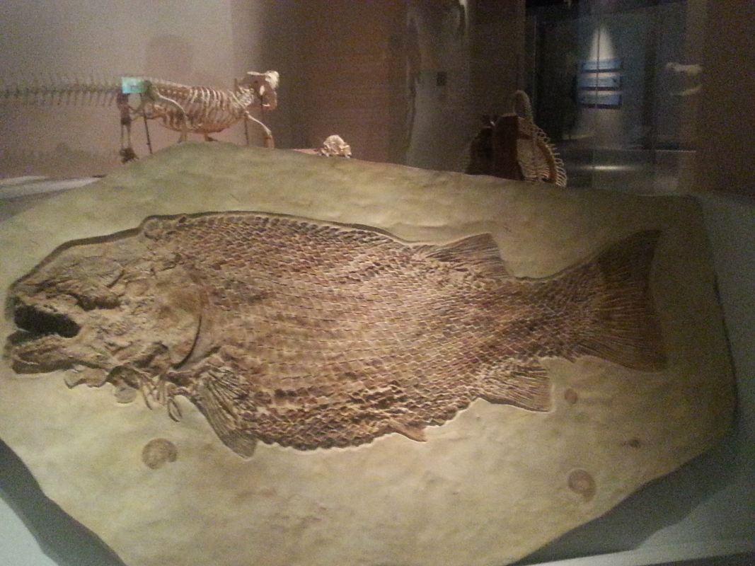 從龍到獸~化石展分享~_33