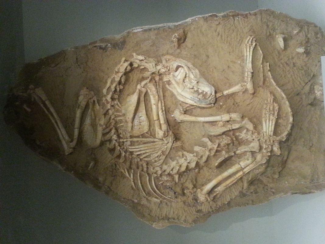 從龍到獸~化石展分享~_27