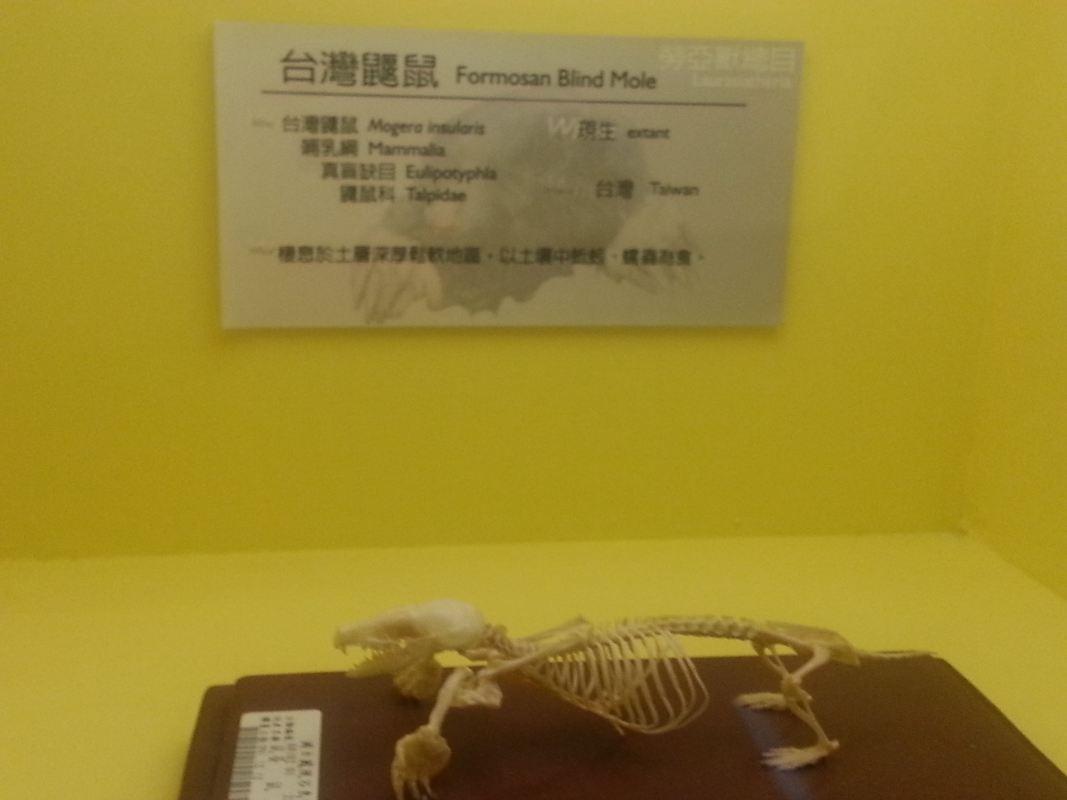 從龍到獸~化石展分享~_26
