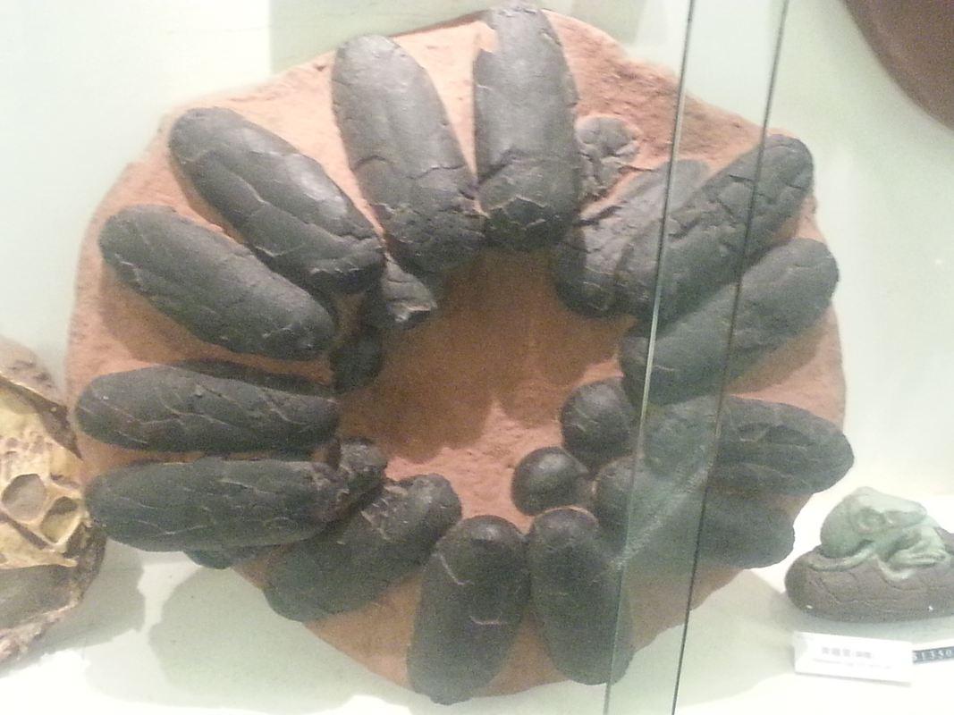 從龍到獸~化石展分享~_14