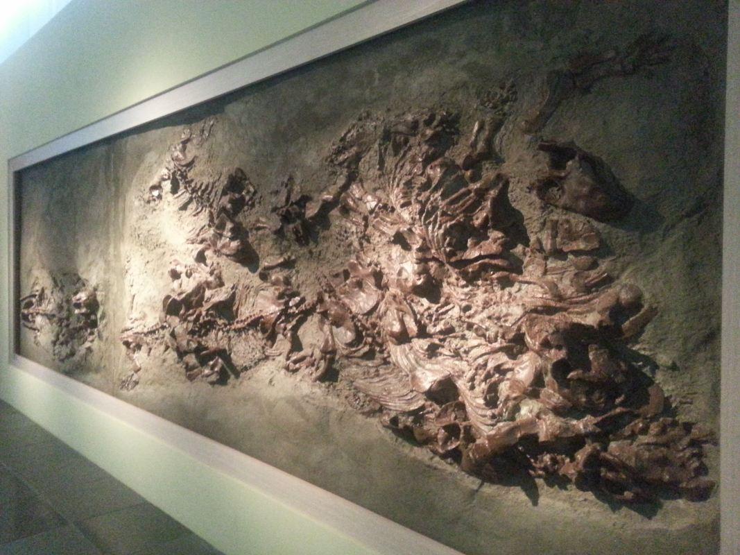 從龍到獸~化石展分享~_12