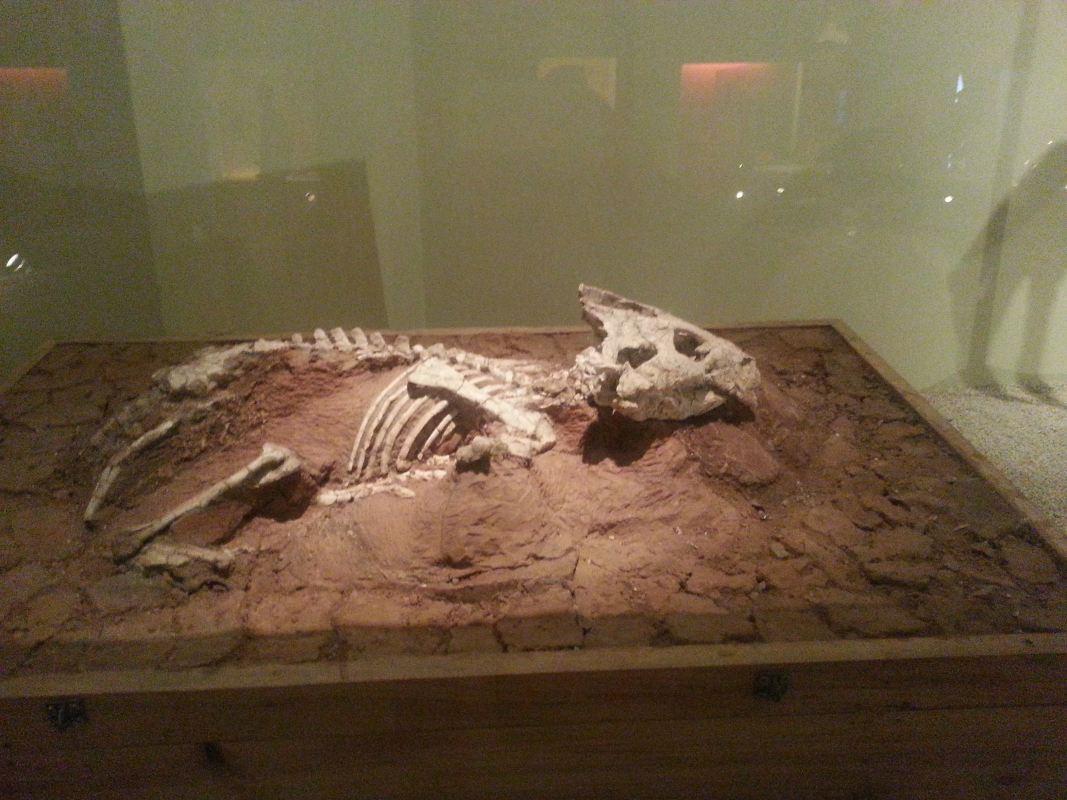 從龍到獸~化石展分享~_05