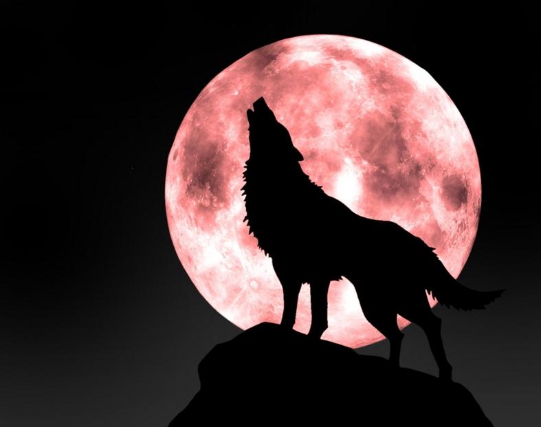 [太極] 2/18 狼若回頭,必有理由; 不是報恩,就是報仇。