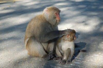 S. 猴媽媽教子