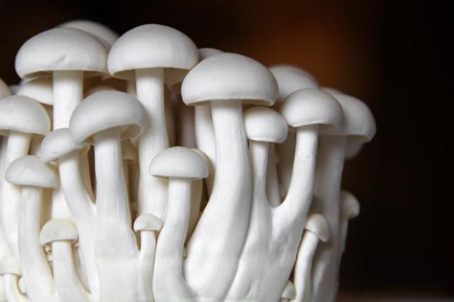 WOW 屋子裡長出了蘑菇?這可能意味著家裡太潮濕陰暗了!但若整棟房都由蘑菇『長』成呢?_02