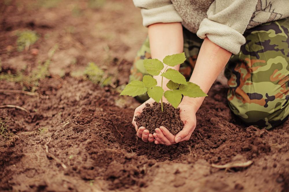 不追求曇花一現的煙火,而是栽培穩定採收的龍果樹